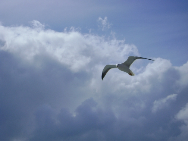 16 Seagull