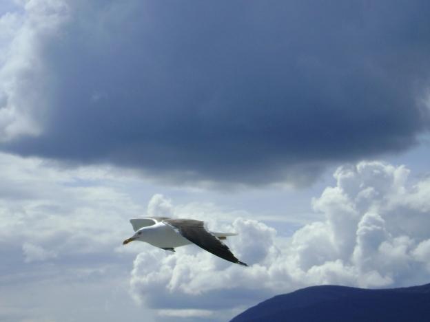 19 Seagull