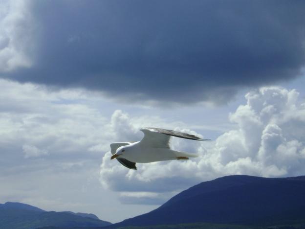 20 Seagull
